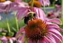 Zaproś pszczoły na balkon
